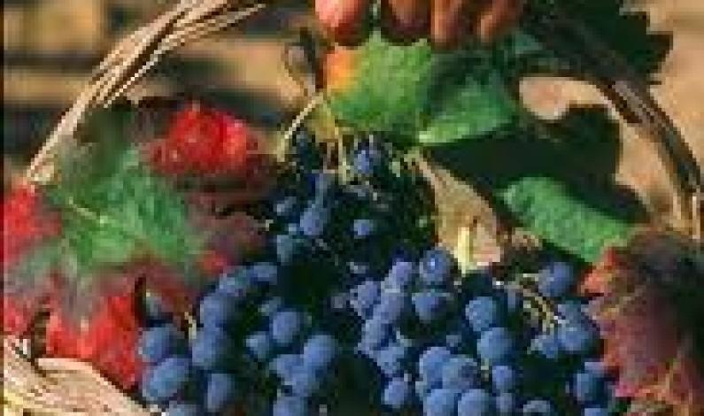 La Vitivinicoltura del Lazio tra Tradizione E Innovazione