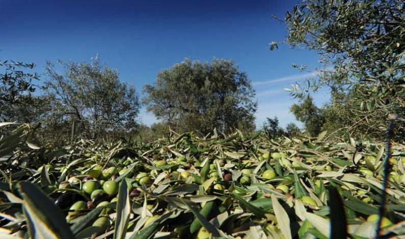 CRA OLI Calabria per Master Dieta Mediterranea e Sostenibilità Ambientale