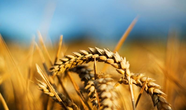 Agricoltura: si pensa a piani di viluppo per combattere la fame