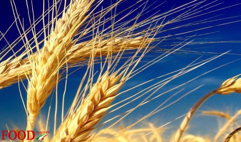 """Pac: Italia, al via la semplificazione per oltre 550 mila """"piccoli agricoltori"""""""