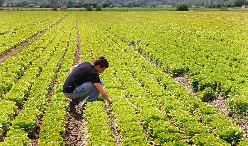 Legge di bilancio: azzerata Irpef agricola ed esenzione totale contributi previdenziali per 3 anni agli under 40.