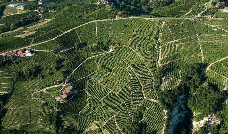Distretti del vino, 7 su 10 in crescita nella prima parte dell'anno. I dati di Intesa San Paolo